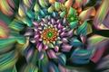 Picture flower, line, colored, petals