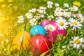 Picture flowers, chamomile, eggs, Easter, flowers, spring, Easter, eggs