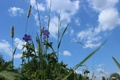 Picture the sky, flowers, nature, Grass, green