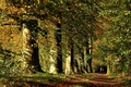 Picture Autumn, leaves, leaves, path, track, trees, falling leaves, the ranks, grove, forest, rays, forest, nature, ...