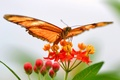 Picture flower, leaves, butterfly, plant, wings, moth
