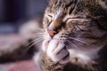 Picture cat, paw, face, cat, Kote