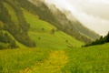 Picture Alps, greens, mountains, nature, road, forest