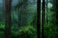 Picture haze, fern, forest, nature