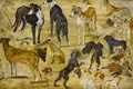 Picture Sketches Of Dogs, animals, Jan Brueghel the elder, picture
