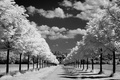 Picture rays, background, nature, photo, day, trees, black, road, Wallpaper, white, alley, the sun, the sky, ...