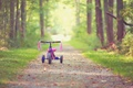 Picture bike, widescreen, bicycle, childhood, leaves, HD wallpapers, Wallpaper, tree, leaves, tree, trees, full screen, background, ...