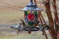 Picture birds, branches, feeder