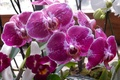 Picture flower, grass, flowers, widescreen, Wallpaper, wallpaper, orchids, Orchid, widescreen, background, the Wallpapers, full screen, HD ...