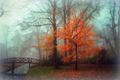 Picture fog, Park, autumn, landscape