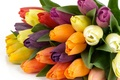 Picture flower, flowers, nature, Tulip, bouquet, spring, tulips, beautiful