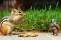 Picture nuts, funny, toy, almonds, Chipmunk