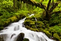 Picture waterfall, river, forest, nature