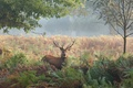 Picture nature, trees, deer, fern, horns, grass, autumn, maral