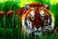 Picture animal, tiger, wallpaper