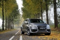 Picture jeep, grey, metallic, trees, metallic, leaves, autumn, grey, Audi, jeep, Audi, forest