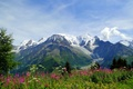 Picture flowers, Alps, mountains, nature, meadow, Alps, Blanc, Mont Blanc