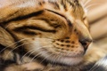 Picture cat, face, sleep, cat