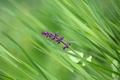 Picture grass, greens, lilac, flower, leaves