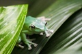 Picture frog, green, macro, leaves