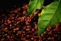 Picture leaves, macro, black, grain, leaf, coffee, green, sheets, grain