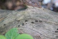 Picture wood, nature, tree, ant, summer, small, insects, forest