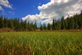 Picture the sky, grass, field, forest