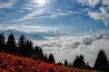 Picture Autumn, Fog, Fog