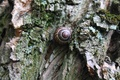 Picture tree, moss, snail