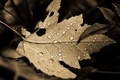 Picture leaf, macro, background, nature, drops, leaves