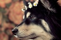 Picture dog, wreath, background