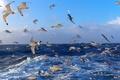 Picture SEA, WATER, HORIZON, The OCEAN, The SKY, WAVE, SURFACE, PACK, BIRDS, SEAGULLS, DAL