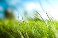 Picture Grass, green, leaves