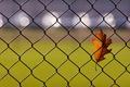Picture glare, autumn, sheet, the fence, oak