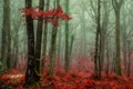 Picture trees, autumn, forest