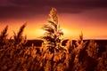 Picture summer, grass, night