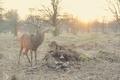 Picture wapiti, antlers, elk, deer, creature, trees, animal, mammal, nature