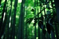 Picture green colour, bamboo, forest, characters