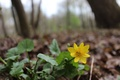 Picture green, mood, yellow, flower, forest