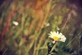 Picture summer, grass, Daisy, flowers