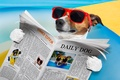 Picture humor, reads, Jack Russell Terrier, newspaper, glasses, lies