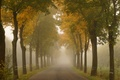 Picture road, summer, trees