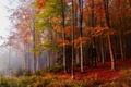 Picture trees, autumn, forest, nature
