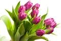 Picture bouquet, purple, tulips