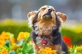 Picture flowers, dog, muzzle, dog, collar, fun