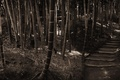 Picture Forest, Sepia, Bamboo, Steps