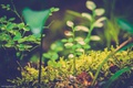 Picture moss, my, grass, blueberries, nature, greens, macro