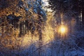 Picture the sun, winter, snow, forest, sunset