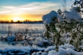 Picture The sun, Snow, Tree