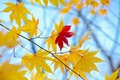 Picture autumn, leaves, macro, background, tree, Wallpaper, yellow, red, wallpaper, leaves, widescreen, background, leaves, macro, tree, ...